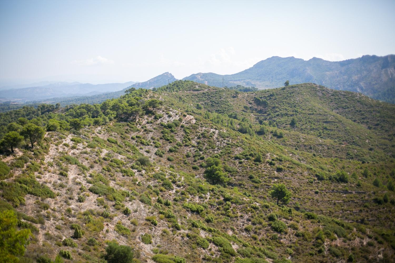 Hill 481