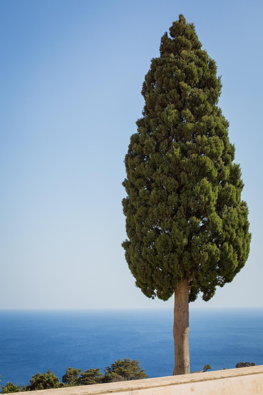 Baum im Kloster Piso Moni Preveli auf Kreta