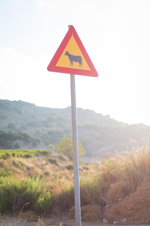 Vorsicht, Kühe!