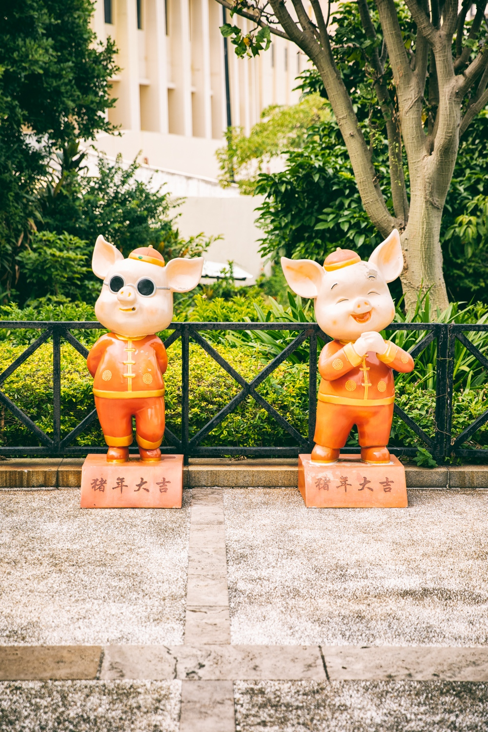 Pigs, Macao