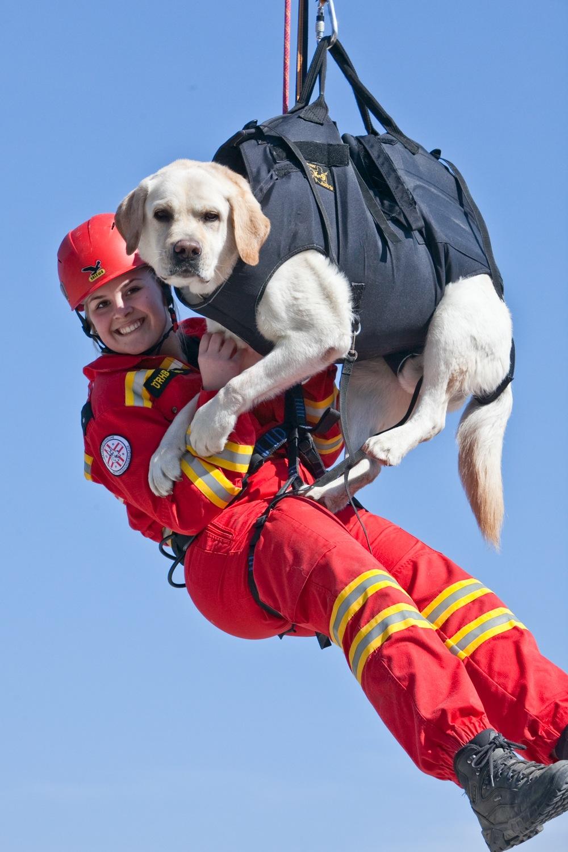 Österreichische Rettungshundebrigade