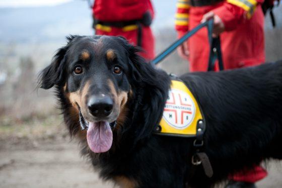 Landesübung der Staffel Nord der Österreichischen Rettungshundebrigade