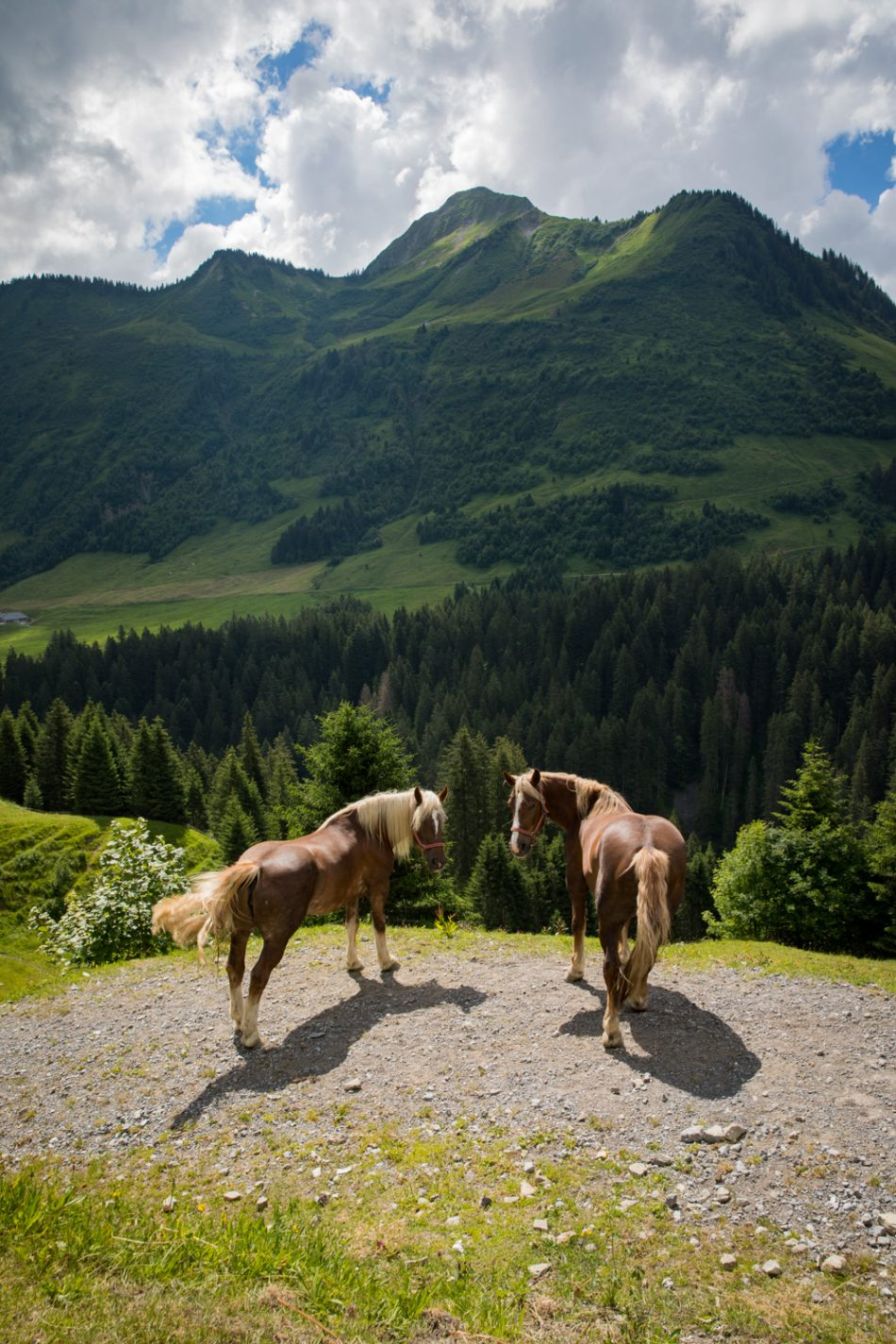 Pferde bei Damüls